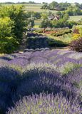 A `Garden full of lavender` arranged by Barbara and Andrzej Olender in Ostrów 40 km from Krakow. The smell and color of lavender. Ostrow, Poland - June 6 stock photography