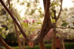 The garden is full of the vigour of springtime. Begonia flowers blooming in Zhengzhou Bi Sha Gang Park Royalty Free Stock Image