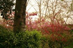 The garden is full of the vigour of springtime. Begonia flowers blooming in Zhengzhou Bi Sha Gang Park Stock Photos