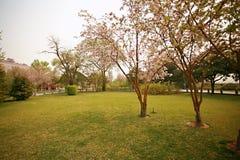 The garden is full of the vigour of springtime. Begonia flowers blooming in Zhengzhou Bi Sha Gang Park Stock Images