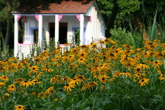 Garden of Fun. Children's Playhouse in the background with a garden of Black Eyed Susans in the foreground Stock Images