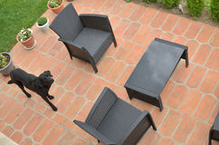 Garden furniture and a dog. In a backyard - bird`s eye view stock photos