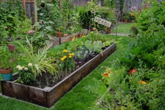Garden in a Garden. A raised bed filled with herbs and vegetables is nestled in the center of two other narrow gardens. A rustic, delightful sign adds and Royalty Free Stock Photo