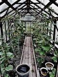 Garden 1 stock image