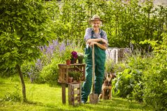Garden gardener spade straw hat standing dog Royalty Free Stock Image