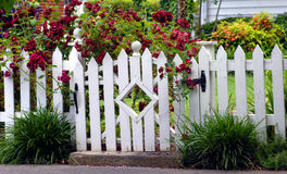Garden Gate. White picket fence fends off the overflow of red roses blooming in this homes yard. Diamond architecture in garden gate adds a unique flair this stock image