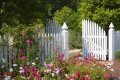 Garden Gate. White Picket Fence and Garden Gate with Multi-Colored  Flowers Royalty Free Stock Photos
