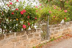 Garden Gate. A garden gate flanked by Hibiscus flowers on a backroad in Bermuda stock photography