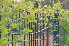 Garden gate. Black cast iron garden gate nature plants flowers soft curve curvy green metal Stock Photography