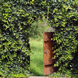 Garden gate with ivy archway. Way into the garden, open gate royalty free stock photo