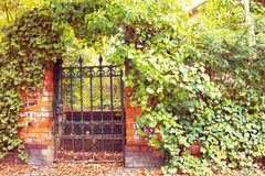 Garden Gate. Overgrown Old Garden Gate in Fall Stock Image