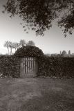 Garden Gate... what's behind there?. Garden Gate protecting a secredt garden royalty free stock image