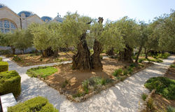 Garden of Gethsemane Stock Images