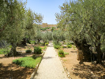 Garden of Gethsemane Stock Photos