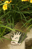 Garden gloves. Gardening gloves and day lilies royalty free stock photos