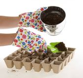 Garden Gloves, Shovel Placing Soil into Pots. Gardener wearing colorful flower patterned  gardening gloves is using a green shovel to place soil from a silver Royalty Free Stock Image
