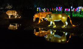 Garden Glow Dubai, UAE Royalty Free Stock Photo