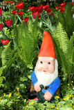 Garden gnome. Sitting among fern and tulips Stock Image