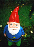 Garden Gnome. A friendly garden gnome looking up. Taken with a lomo Royalty Free Stock Image