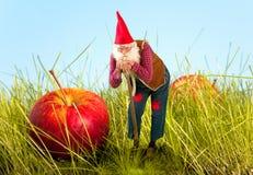 Garden gnome and apple Stock Photos