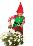 Garden gnome boy with daisies. Boy dressed as a garden gnome with a watering can Royalty Free Stock Images