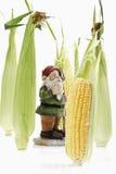 Garden gnome between corn cobs Royalty Free Stock Photography