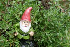 Garden Gnome between green herbs. Funny little garden gnome between green herbs royalty free stock photo