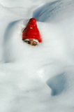Garden Gnome in Snow. Garden Gnome buried in Snow Royalty Free Stock Photo