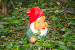 Garden gnome standing in ivy Stock Photos