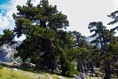 Garden of gods. So called Garden of Gods in Pollino National park, where the Bosnian pine, or Pinus Leucodermis lives, Basilicata , Italy stock photos