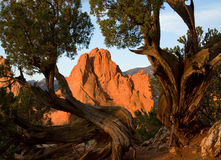 Garden Of The Gods Juniper View Royalty Free Stock Photography