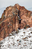 Garden of the Gods Winter Snow Royalty Free Stock Image
