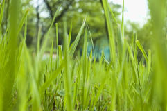 Garden grass Royalty Free Stock Photos