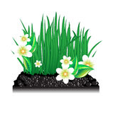 Garden grass with blossoming flowers and ground Stock Photos