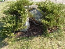 Garden grass gray green material plant stone royalty free stock image