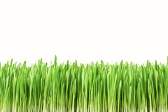 Garden grass isolated on white background Stock Photos