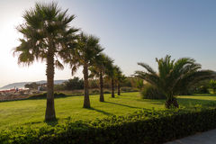 Garden with grass, plants, and palm trees. Stock Photos