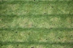 Garden grass rows Stock Images