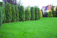garden with grass and trees Stock Photography