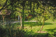 The Garden of Green, Assorted Trees and Flowers, patches of Sunlight, all over Lawn. stock photo