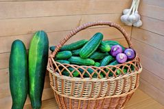 Garden green cucumber in wicker lug Stock Images