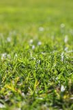 Garden green grass lawn macro perspective. Detail selective focus Royalty Free Stock Images