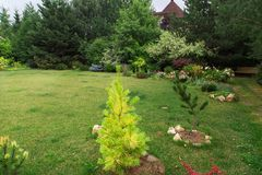 Garden green lawn with coniferous trees. Backyard patio. Cottage garden with Pinetrees stock photo