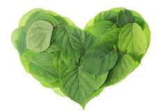 Garden green leaves heart Royalty Free Stock Photo