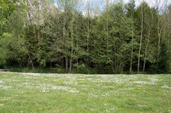 Garden 24. Green pasture meadow with tree line forrest background Royalty Free Stock Image