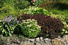 Garden with green and red plants royalty free stock photography