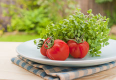 Garden green salad with tomato outdoor. Delicious ripe tomato and lettuce, sliced cucumbers and onion on a garden table outdoors. Healthy eating or vegetarian stock image