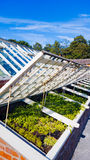 Garden Greenhouse Frame Royalty Free Stock Photo