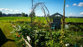 Garden with greenhouse and wood fence royalty free stock photography