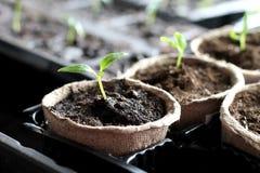 Garden grow vegetable Stock Photos